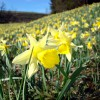 Frühlingserwachen in der Nordeifel