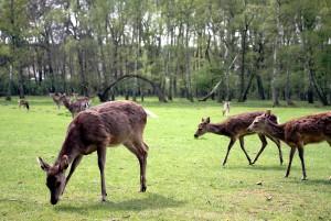 Den Alltag hinter sich lassen und Wildtiere hautnah erleben können die Besucher im Hochwildpark Rheinland, in Kommern. Archivfoto: Alice Gempfer/pp/Agentur ProfiPress