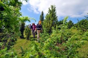 Den ganzen Tag lang stehen am Sonntag, 24. April geführte Stern- und Rundwanderungen mit zertifizierten Nationalpark-Waldführern auf dem Programm. Foto: NET/pp/Agentur ProfiPress