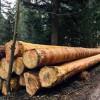 Wertschöpfung durch Holzbau