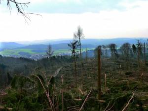 Der Orkan Kyrill im Januar 2007 hatte katastrophale Folgen für die Waldbestände. Im Zuge des Klimawandels rechnen Experten mit einer deutlichen Zunahme von Stürmen im Winterhalbjahr. Foto: HKZ/pp/Agentur ProfiPress