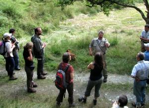 Zu einer dreistündigen Waldexkursion lädt der Nationalpark Eifel am Sonntag, 3. Juli, ab 9.30 Uhr ein. Start- und Zielpunkt ist der Wanderparkplatz an der B 258 in Höhe des früheren Grenzübergangs Wahlerscheid bei Monschau-Höfen. Foto: Nationalparkverwaltung Eifel/pp/Agentur ProfiPress