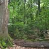 Mehr Totholz im Nationalparkforstamt Eifel