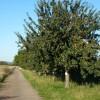 Ernte von Streuobstbäumen ersteigern