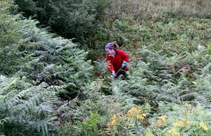 Zu den Aufgaben der Freiwilligen des Bergwaldprojektes gehört auch das Mähen auf brachliegenden Wiesen, um so seltenen Pflanzenarten wie der Orchidee ein Durchkommen zu ermöglichen. Foto: Nationalparkforstamt Eifel/A. Olligschläger/pp/Agentur ProfiPress
