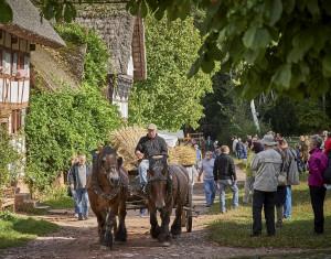 Zahlreiche Kaltblutpferde, historische Wagen und Arbeitsgeräte werden im Einsatz zu sehen sein. Für die Gäste gibt es auch Mitmachaktionen und einen Bauernmarkt mit Produkten aus der Region. Foto: Hans-Theo Gerhards/LVR/pp/Agentur ProfiPress
