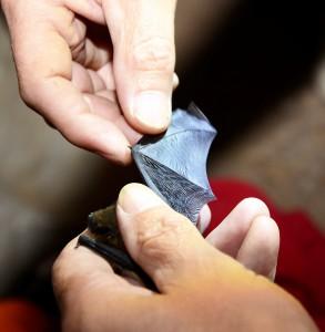Markus Thies untersucht den Zustand der gefangenen Fledermäuse. Foto: Sarah Winter/pp/Agentur ProfiPress