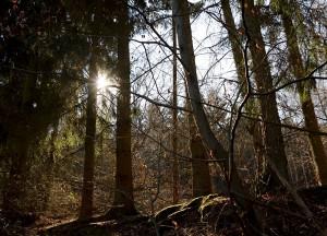 Seit Juli 2013 ist die 46-jährige Journalistin in den Wäldern Deutschlands unterwegs und berichtet auf ihrem Blog von ihren Erlebnissen und Erfahrungen. Foto: Privat/pp/Agentur ProfiPress