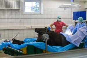 Die Gäste durften beim Betriebsrundgang unter anderem durch eine Glasscheibe eine Operation beobachten. Bild: Tameer Gunnar Eden/Eifeler Presse Agentur/epa