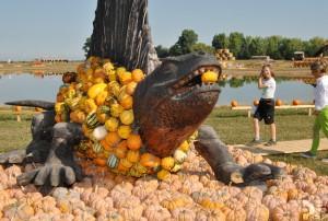 Eigentlich gehört der Dimetrodon zur Gattung der fleischfressenden Dinosaurier. Auf dem Krewelshof begnügt er sich mit einem Kürbis. Foto: Renate Hotse/pp/Agentur ProfiPress