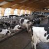 Aktuelles zum Milchmarkt